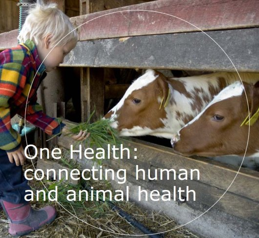 "<L CODE=""C06"">Flyer - One Health: connecting human and animal health</L>"