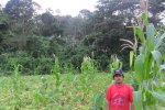 Farmer Fermin in his milpa (maize field) that borders secondary forests