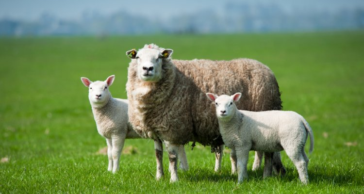 Circularity in livestock farming and animal health and welfare