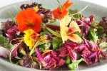 Flower Power salad Picture by FLORIS SCHEPLITZ