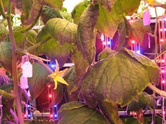 Led-based cultivation systems