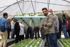 Creating food security and employment for Syrian refugees in Jordan