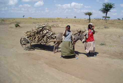 Girls fetching fuel wood