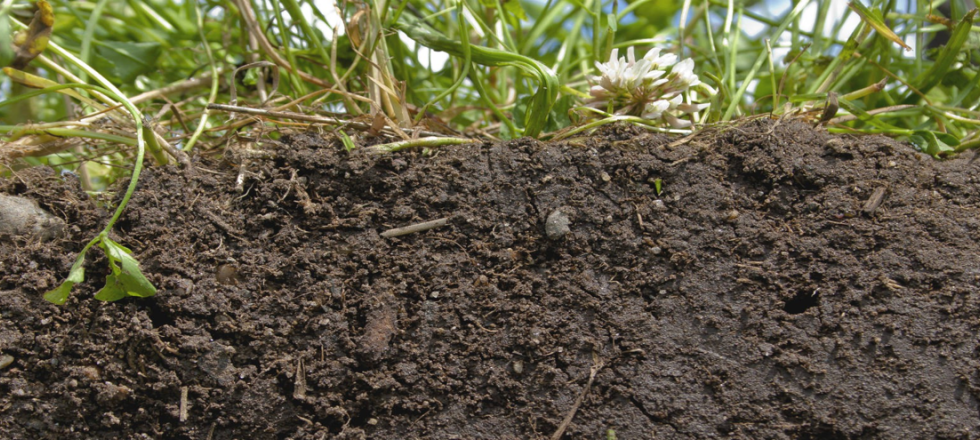 Soil Science cluster