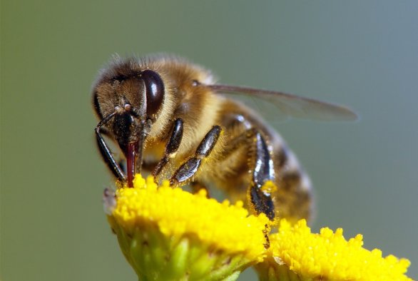 B-GOOD, a new four-year research program on bee health