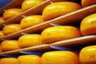 boterzuurbacteriën en kaaskwaliteit
