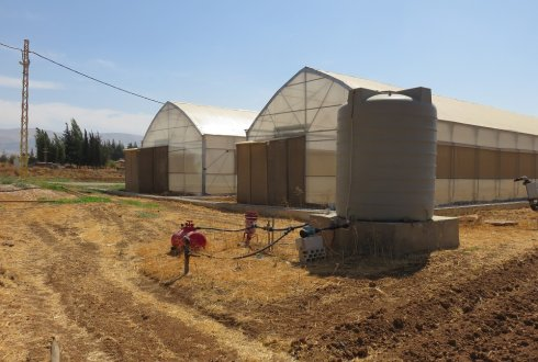 Innovation in horticulture in Lebanon: more jobs for refugees
