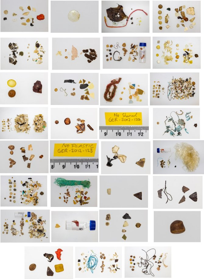 A composition photo of all stomach contents of the German samples studied in this session.