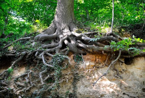 Researchers map how trees, fungi and bacteria collaborate on nutrient exchange worldwide