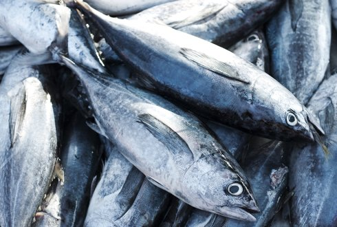 Uncertainty in Bioeconomic Model for Tuna Fishery : Source, Harvest Strategy and Enhanced Information