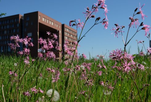 Mowing the flowering meadows for a blossoming campus
