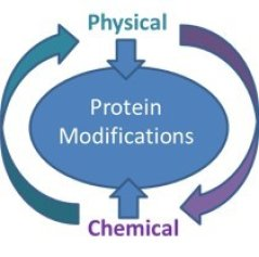 proteinfunctionalization.jpg