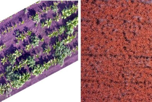 UAV acquired VHR images of mix of potato and sugarbeet canopy (left) and banana plants in false color (left)