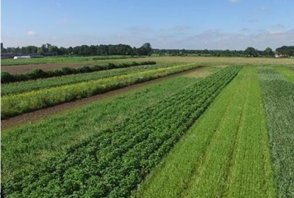 SURVEG - new diversified cropping systems for organic vegetables