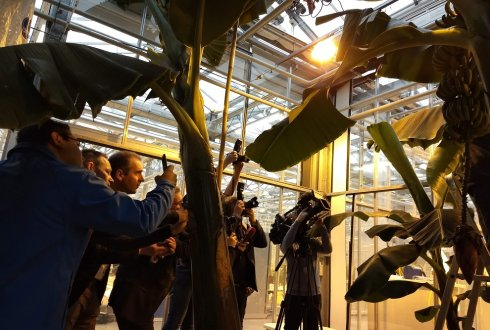 press present at first harvest of Nederbanana at WUR