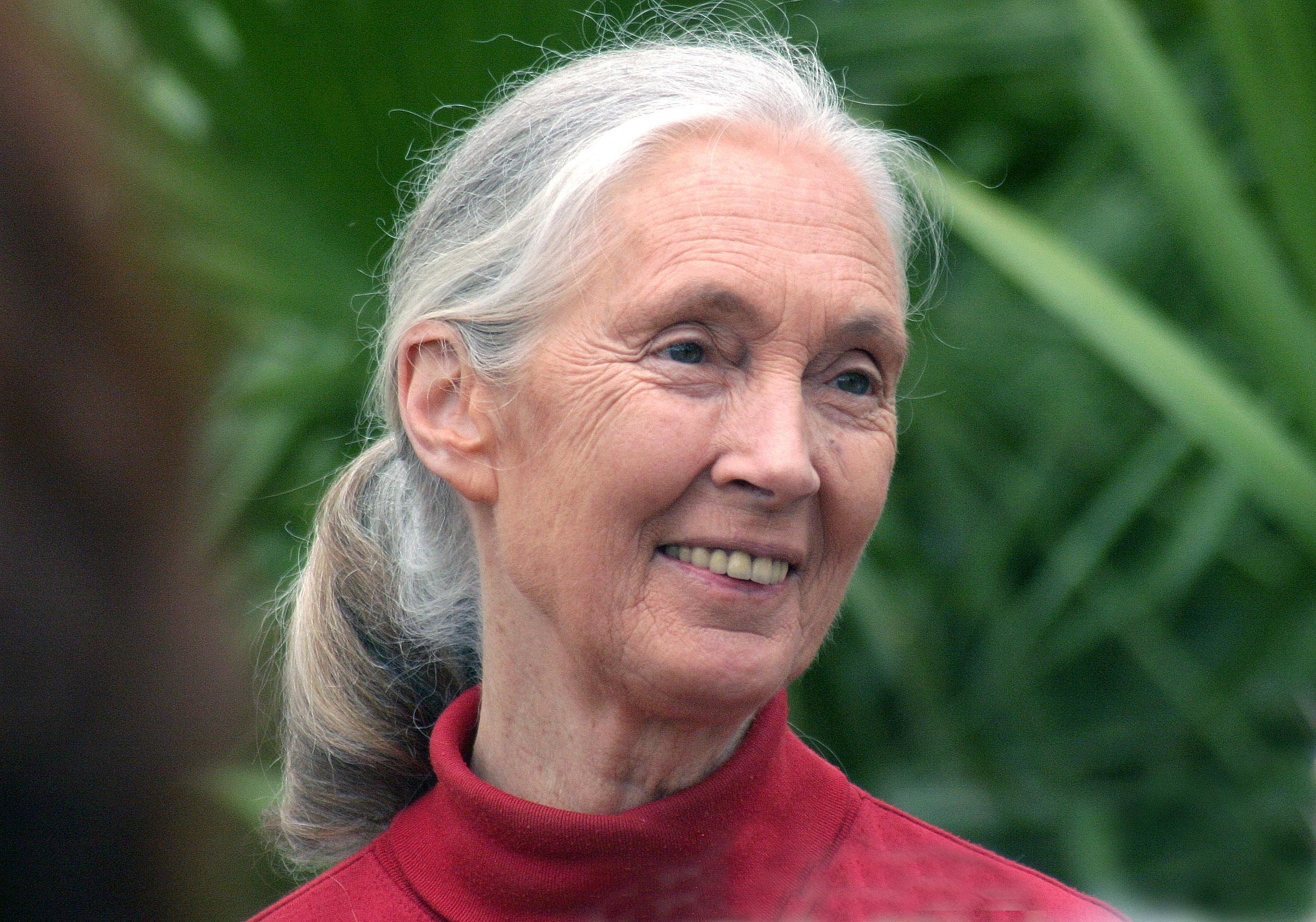 Public lecture by Jane Goodall - WUR Chimpanzee Jane
