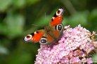 Ontdek de natuur met de nieuwe webapp NatureToday.nl