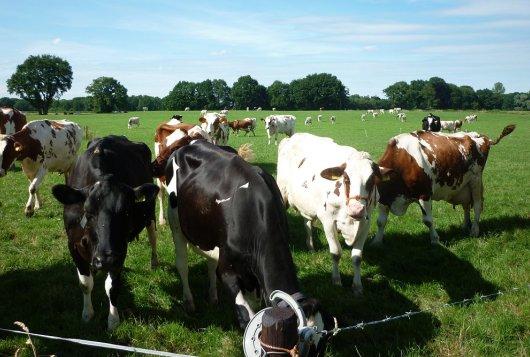 Melkveefonds-projecten nieuwe telg Verantwoorde Veehouderij