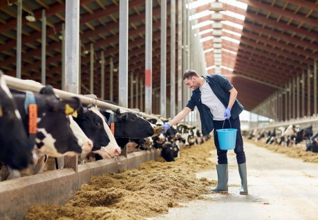 Efficient dairy production