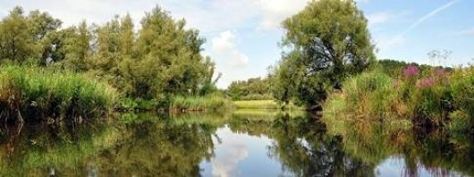 National Park The Biesbosch