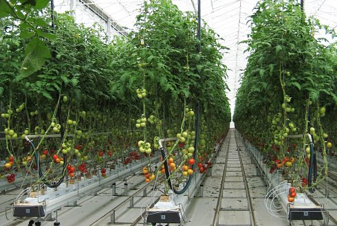 high tech research facility greenhouse horticulture in