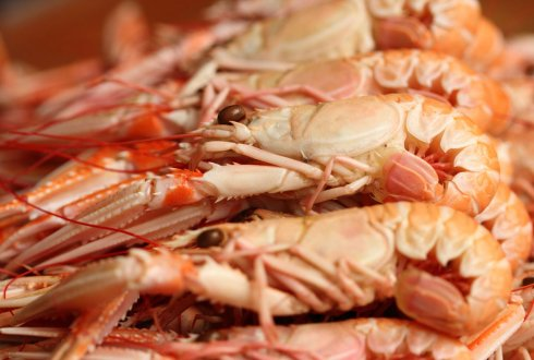 Shrimp quality and safety management along the supply chain in Benin