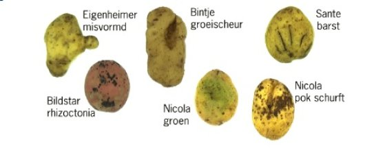 Various potato cultivars and recognisable diseases and defects