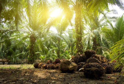 Improving environmental sustainability of palm oil production in Thailand