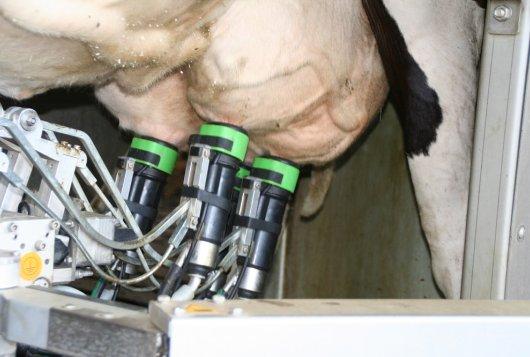Melkproductie belangrijkste selectiecriterium voor lactatietlengte_ZuivelNL