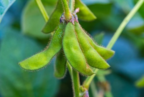 Trusted source 1: transparency in the organic soy chain