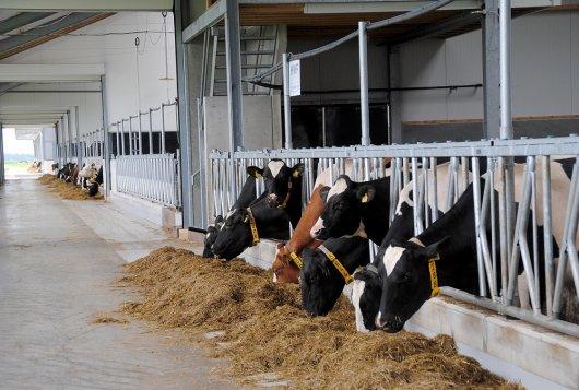 Enterisch methaan: de variatie in emissies in de Nederlandse melkveestapel_veehouderijenklimaat