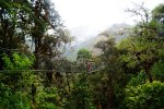 Canopy Trail in Tambopata Rainforest (Peru 2013)