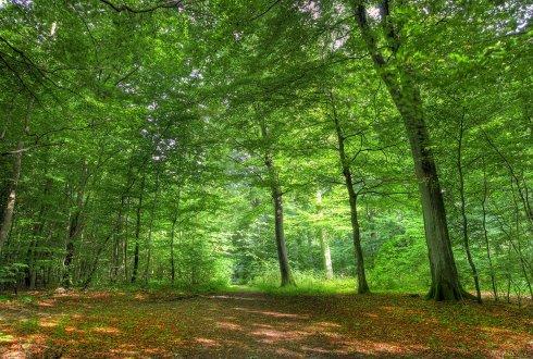 Levende boom bron van leven wur