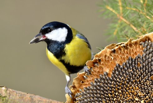 Epigenetic variations in the great tit genome.