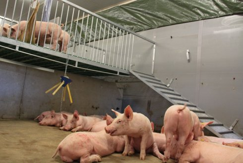 Dutch Swine Innovation Centre opens welfare and labour friendly Plateau 2.0 for finishing pigs