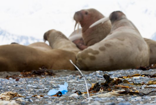 Beach Litter  Spitsbergen 21 - Photo credits WJ Strietman.jpg