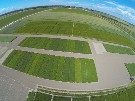 Aerial shots of experimental soya fields in Lelystad.