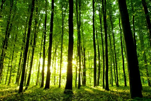 Mitigation solutions for agriculture and forestry