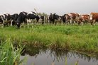 Understanding cattle genomes with BovReg