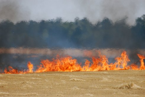 Effect of fire occurrence and frequency on topsoil properties and soil (fertility) losses by runoff