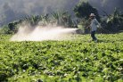Spraying pesticides on soy field