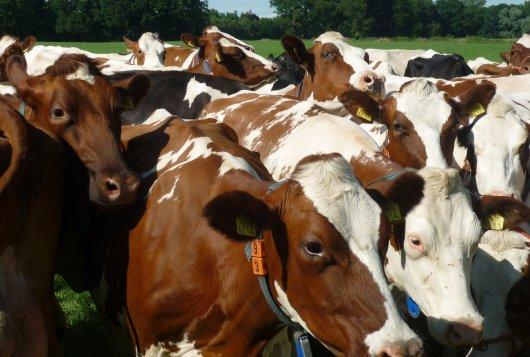 Digitaliseren van Melkveefonds projecten