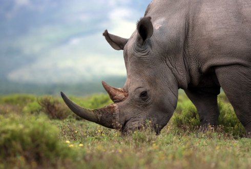 New methods to protect rhinos