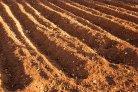 W:\PROJECTS\FotosWebsiteWageningenURnl\Shutterstock Foto's LR\shutterstock_9733726_grond_akker_bodem_geploegd_bouwvoor_ploegen_LR.jpg