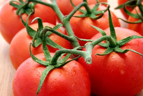 Genetics and regulation of combined abiotic and biotic stress tolerance in tomato