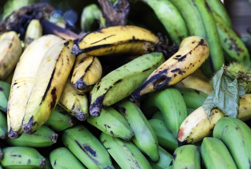 Sustainable bananas from the Dominican Republic