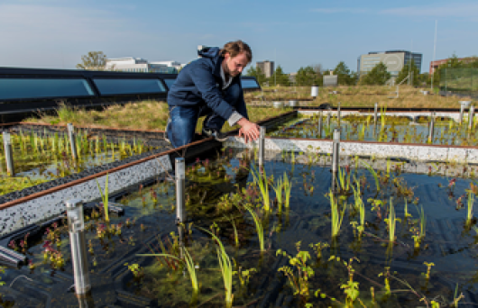 Roof-top experimental units at NIOO-KNAW. (Photo: Wild Frontiers )