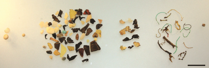 Stomach plastic contents of an individual northern fulmar from Svalbard, 2013. L–R: Industrial pellets; probably industrial; fragments; sheets; threads; foam. Scale bar indicates 1 cm