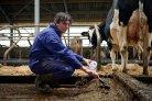 Melkveehouder verstrookt honderden kuubs methaan