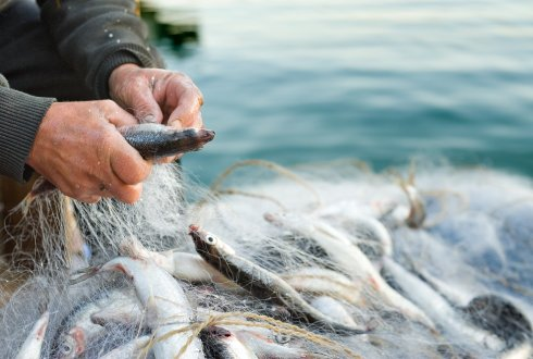 about the welfare of wild caught fish wurabout the welfare of wild caught fish